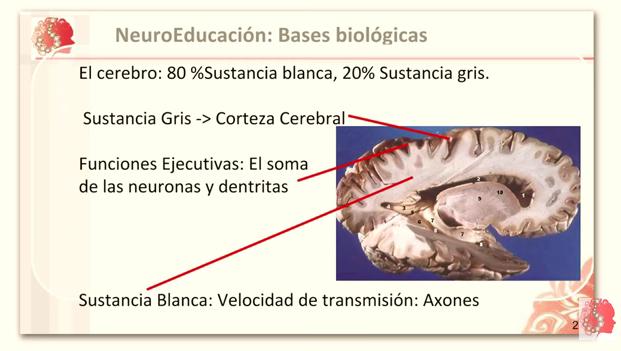Bases biológicas de la conducta, la inteligencia y las emociones.
